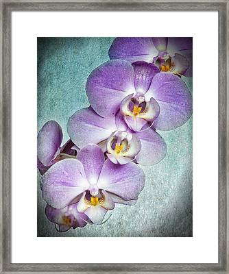 Four Little Orchids Framed Print