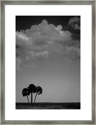 Four Palms Framed Print