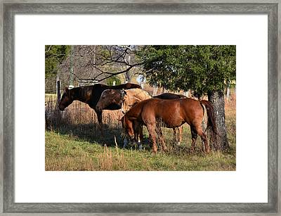 Four Pals - 51008424c Framed Print by Paul Lyndon Phillips