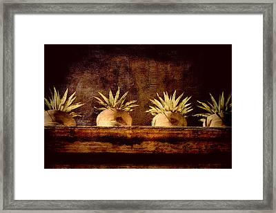 Four Potted Plants Framed Print
