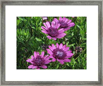 Four Purple Flowers Framed Print by Tina M Wenger