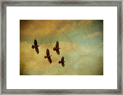 Framed Print featuring the photograph Four Ravens Flying by Peggy Collins