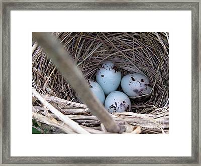 Four Red-winged Blackbird Eggs Framed Print by J McCombie