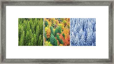 Four Season Forest Framed Print by Borchee