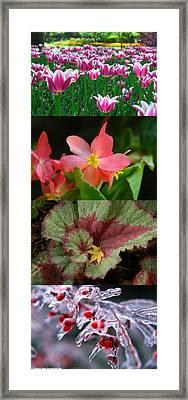 Four Seasons Of Flowers Vert Framed Print