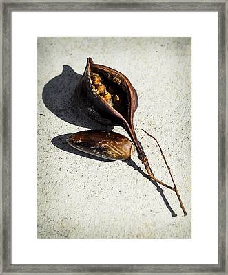 Four Seeds In A Pod Framed Print by Camille Lopez
