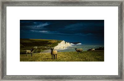 Four Sheep And Seven Sisters Framed Print by Chris Lord