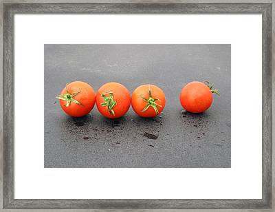 Four Tomatoes Framed Print