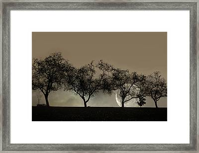 Four Trees And A Moon Framed Print by Ann Bridges