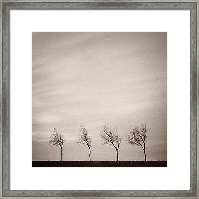 Four Trees Framed Print by Dave Bowman
