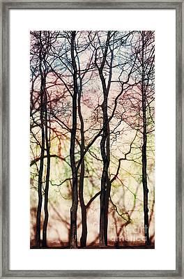 Four Trees Framed Print by Elena Lir-Rachkovskaya