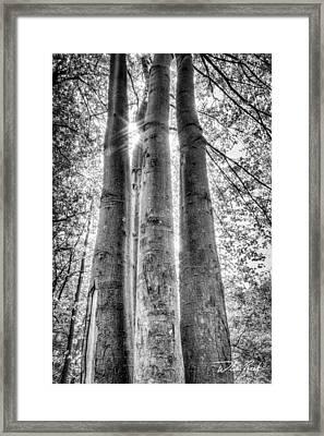 Four Trunks Framed Print by William Reek