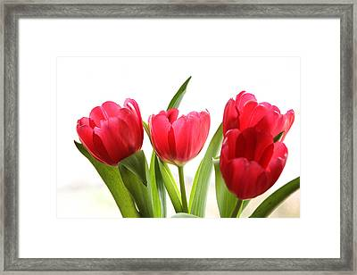 Four Tulips Framed Print by Menachem Ganon
