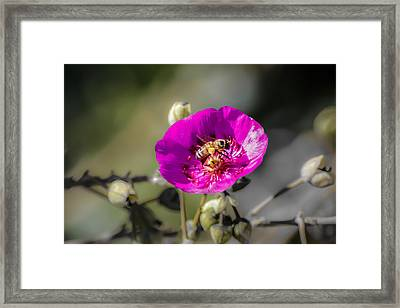 Fower And Bee Framed Print by Photographic Art by Russel Ray Photos