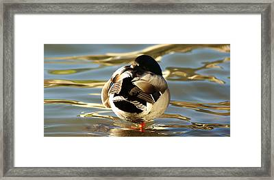 Fowl Ball Framed Print by Jeremy Farnsworth