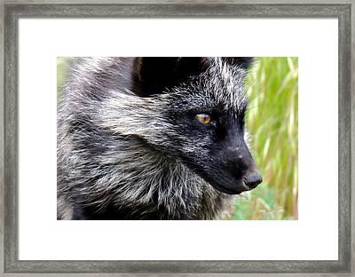Fox 2 Framed Print by Kae Cheatham