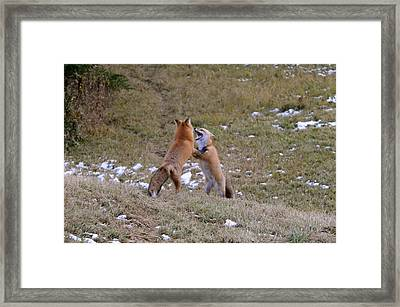 Framed Print featuring the photograph Fox Dance by Sandra Updyke
