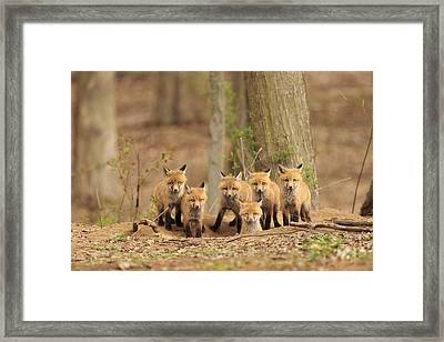 Fox Family Portrait Framed Print by Everet Regal