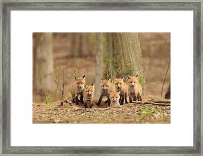 Fox Family Portrait Framed Print