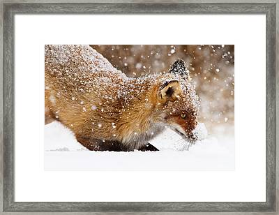 Fox First Snow Framed Print by Roeselien Raimond
