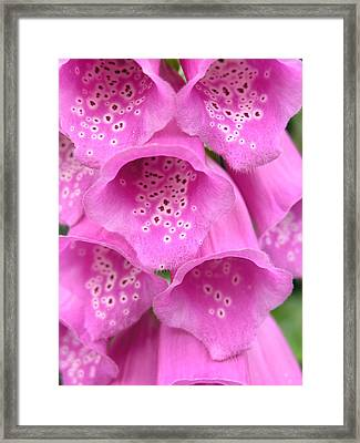 Fox Glove Framed Print