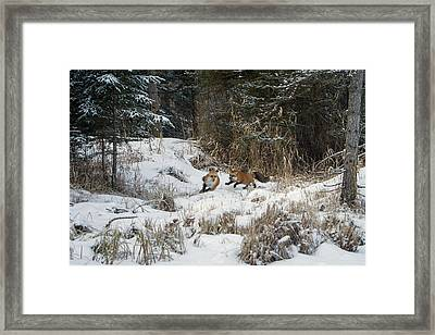 Fox Hollow Framed Print by Jack Bell