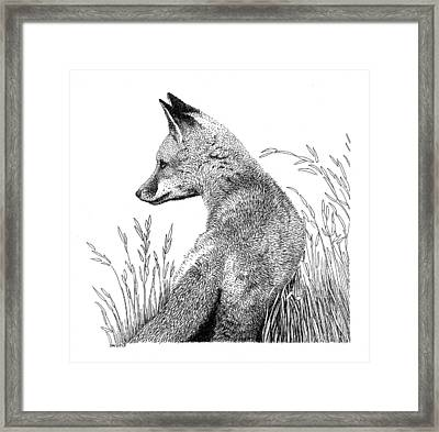 Fox In Grass Framed Print