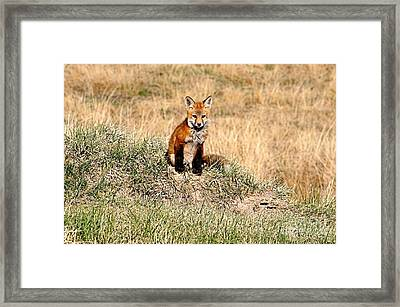 Fox Kit Framed Print
