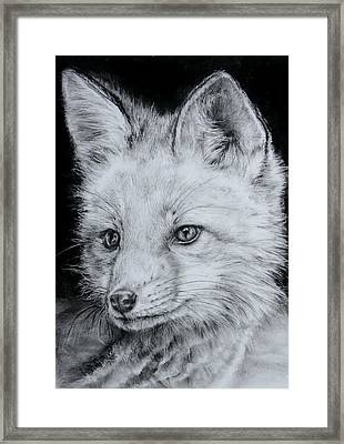 Fox Kit Framed Print by Jean Cormier