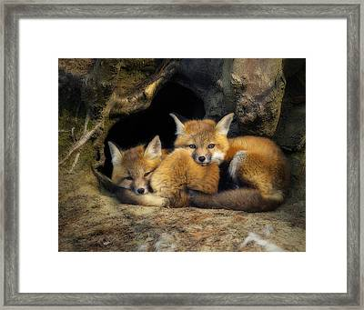 Best Friends - Fox Kits At Rest Framed Print by John Vose