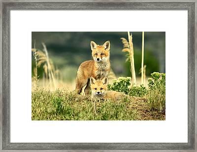 Fox Kits II Framed Print