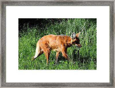 Fox - National Zoo - 01136 Framed Print by DC Photographer