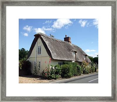 Fox On The Roof Framed Print by Richard Reeve