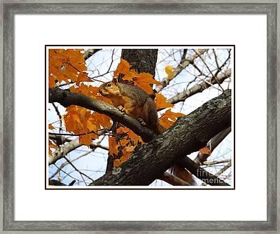 Fox Squirrel In Autumn Framed Print by Sara  Raber