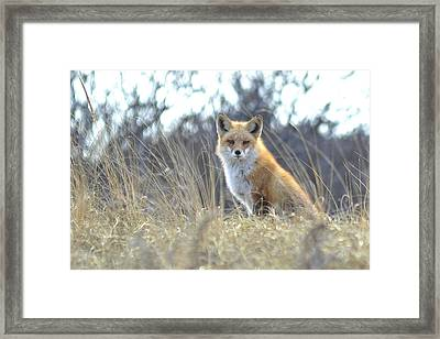 Fox Framed Print by Terry DeLuco