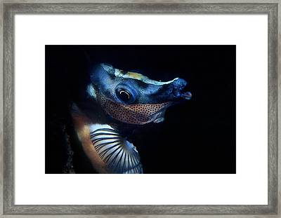 Foxface Rabbitfish Framed Print