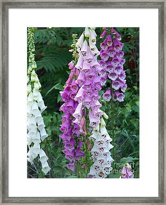 Foxglove After The Rains Framed Print by Eunice Miller