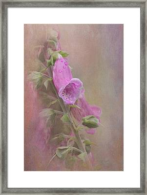Foxglove Framed Print by Angie Vogel