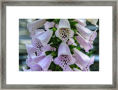 Foxglove At Waters Edge Framed Print