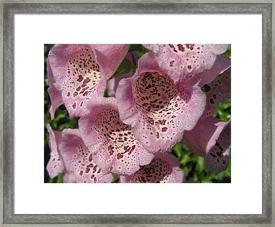 Speckled Framed Print by Cheryl Hoyle