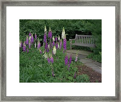 Foxglove Garden Path With Bench Framed Print