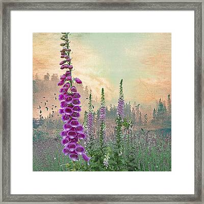 Foxglove In Washington State Framed Print by Jeff Burgess