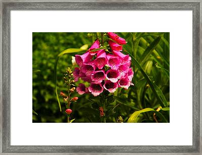 Foxglove Framed Print by Jeff Swan