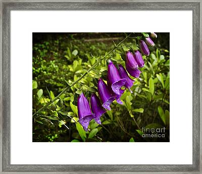 Framed Print featuring the photograph Foxglove by Maria Janicki