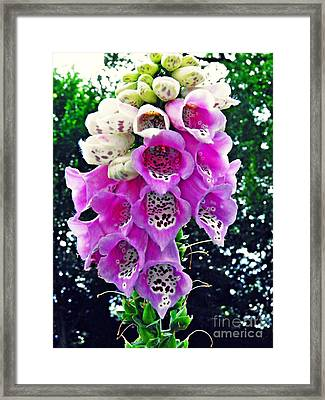 Foxglove Framed Print by Sarah Loft