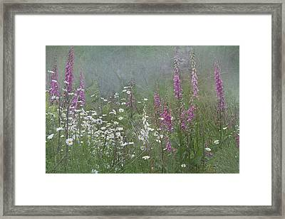Foxgloves And Daisies Framed Print by Angie Vogel