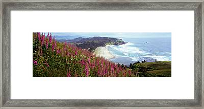 Foxgloves At Cascade Head, Tillamook Framed Print
