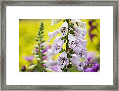 Foxgloves Framed Print by Tim Gainey