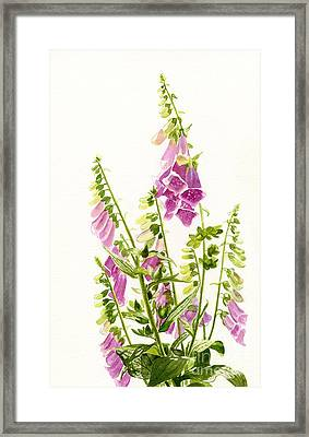 Foxgloves With White Background Framed Print by Sharon Freeman