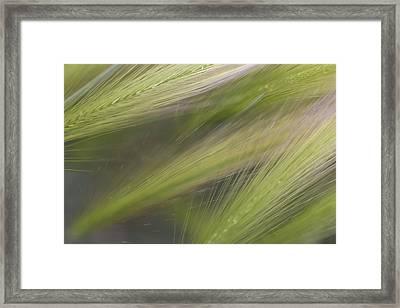 Foxtail Fans Framed Print